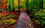 lush forest landscape with wooden pathway covered in autumn leaves
